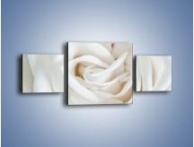 Obraz na płótnie – Biel róży za dnia – trzyczęściowy K709W4