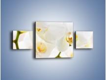 Obraz na płótnie – Białe storczyki blisko siebie – trzyczęściowy K811W4