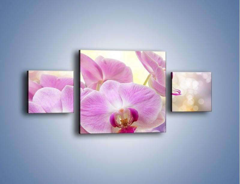 Obraz na płótnie – Lila kwiaty o poranku – trzyczęściowy K976W4