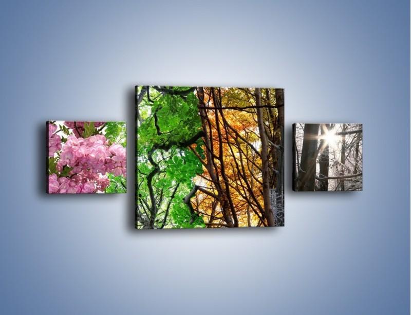 Obraz na płótnie – Drzewa w różnych kolorach – trzyczęściowy KN037W4