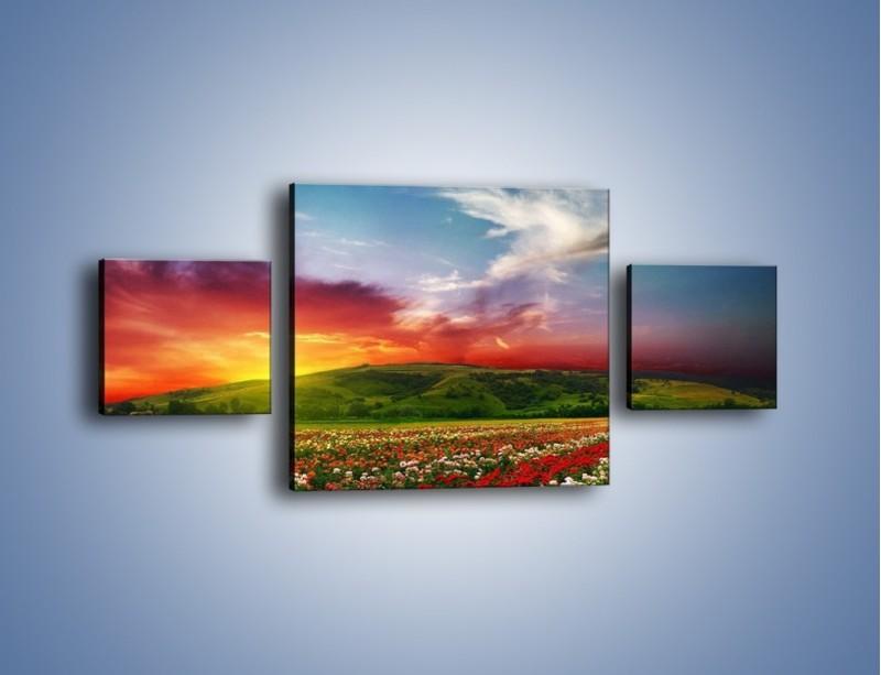 Obraz na płótnie – Uprawy kolorowych róż – trzyczęściowy KN060W4