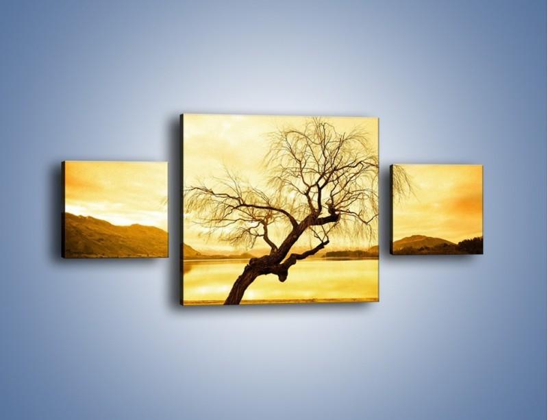 Obraz na płótnie – Pochylone drzewo w sepii – trzyczęściowy KN1033W4