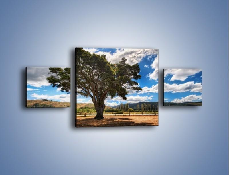 Obraz na płótnie – Cień pod rozłożystym drzewem – trzyczęściowy KN1037W4