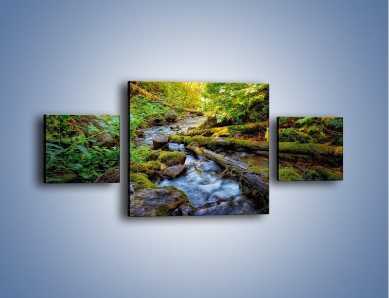 Obraz na płótnie – Drewno ścięte do wody – trzyczęściowy KN1059W4