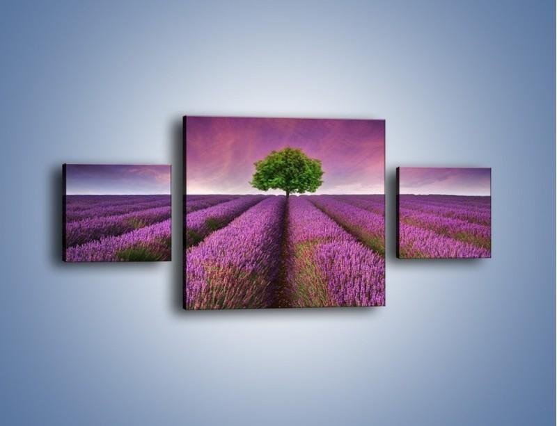 Obraz na płótnie – Droga lawendową do drzewa – trzyczęściowy KN1158AW4
