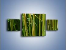 Obraz na płótnie – Bambusowe łodygi z bliska – trzyczęściowy KN118W4