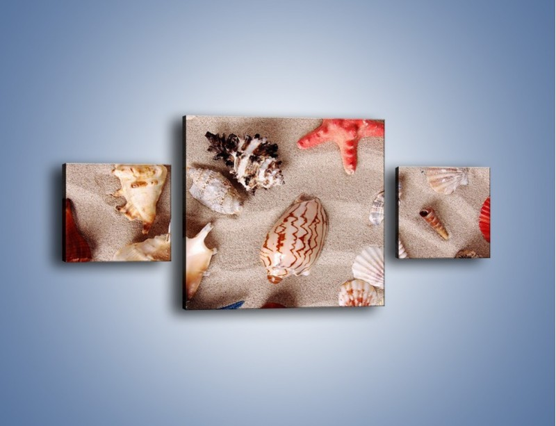 Obraz na płótnie – Kolorowe skorupiaki – trzyczęściowy KN1214AW4