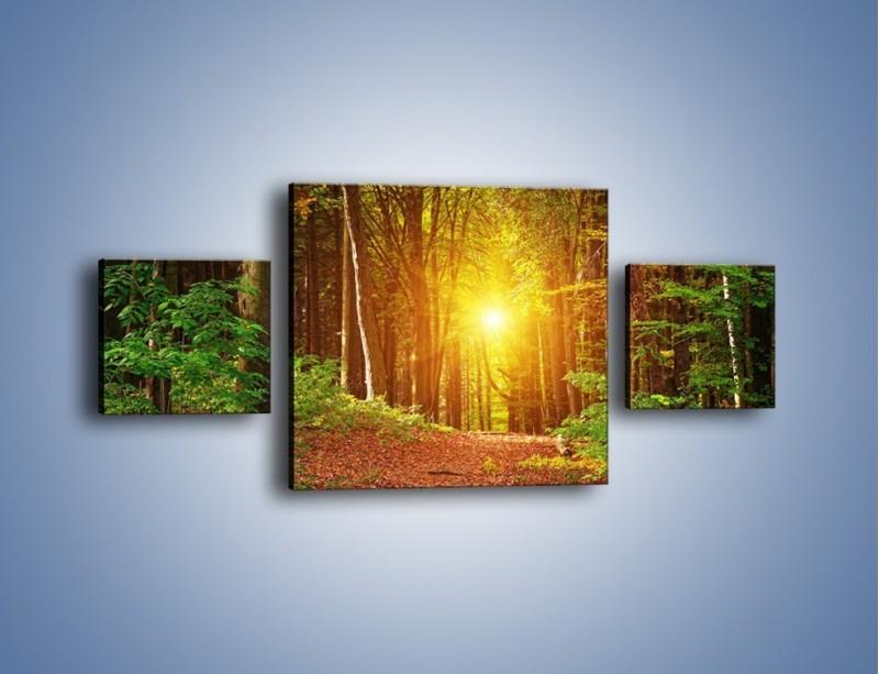 Obraz na płótnie – Polski krajobraz leśny – trzyczęściowy KN1257AW4