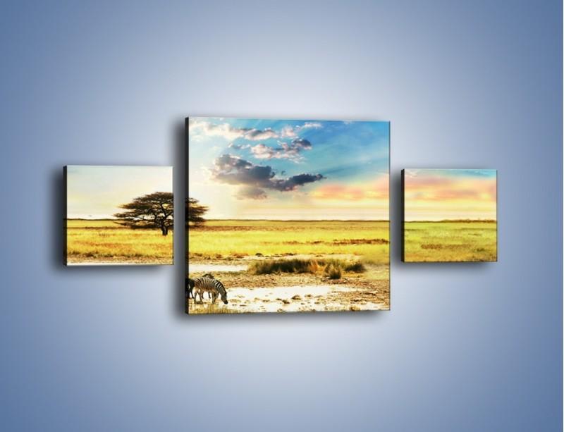 Obraz na płótnie – Zebry na sawannie – trzyczęściowy KN1298AW4