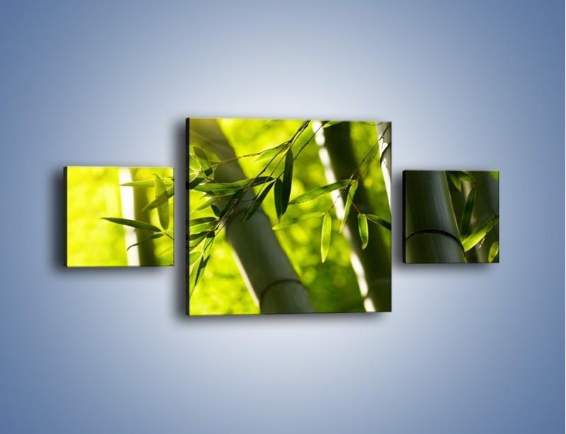 Obraz na płótnie – Twarde łodygi bambusa – trzyczęściowy KN1314AW4
