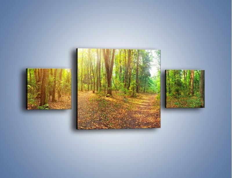 Obraz na płótnie – Przejrzysty piękny las – trzyczęściowy KN1344AW4
