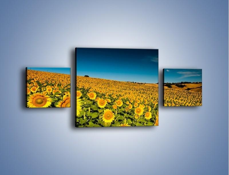 Obraz na płótnie – Słonecznikowe uśmiechnięte główki – trzyczęściowy KN205W4