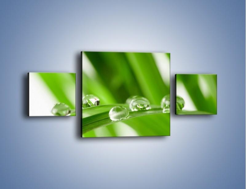 Obraz na płótnie – Krople rosy na liściu – trzyczęściowy KN339W4