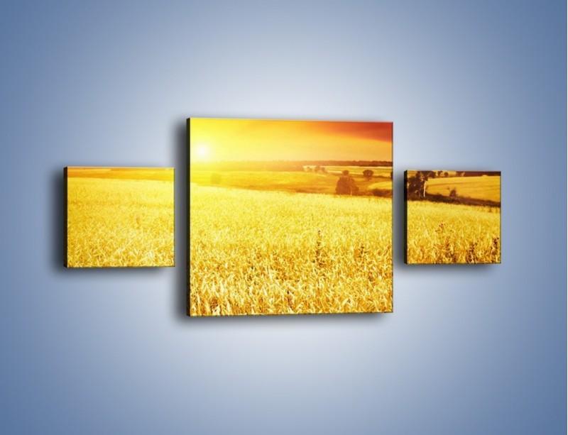 Obraz na płótnie – Zboże złote jak słońce – trzyczęściowy KN398W4