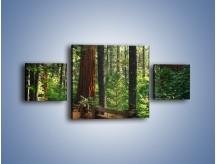 Obraz na płótnie – Chodźmy do lasu – trzyczęściowy KN611W4