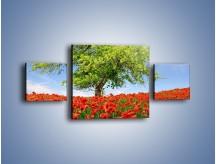 Obraz na płótnie – Cała łąka maków – trzyczęściowy KN623W4