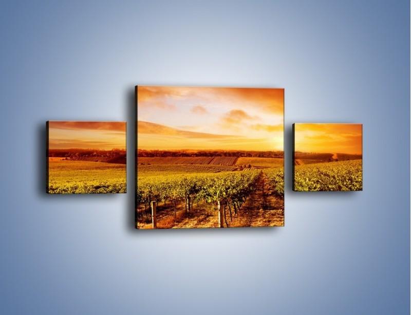 Obraz na płótnie – Ziemia i uprawy – trzyczęściowy KN673W4