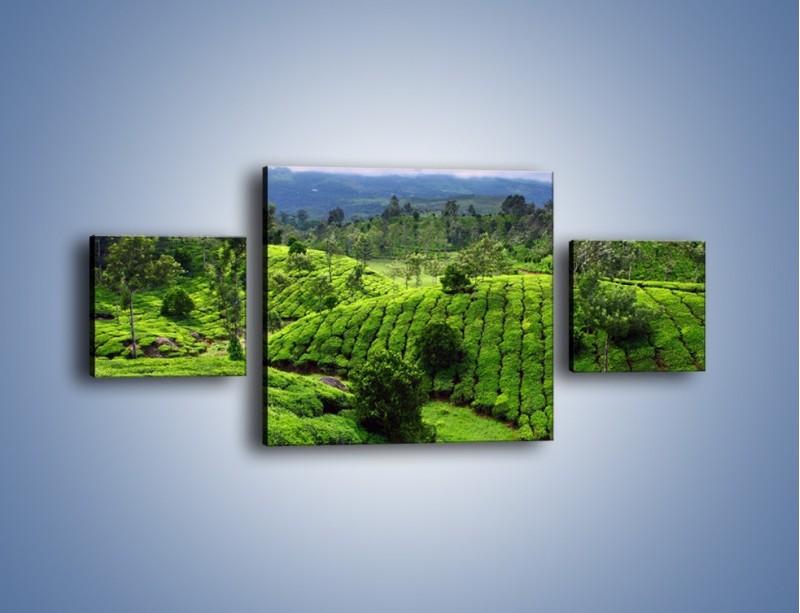 Obraz na płótnie – Rozległa zielona kraina – trzyczęściowy KN872W4
