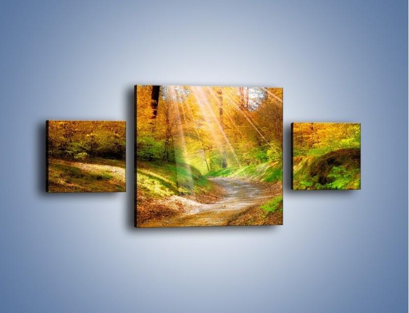 Obraz na płótnie – Promienną i słoneczną ścieżką przez las – trzyczęściowy KN989W4