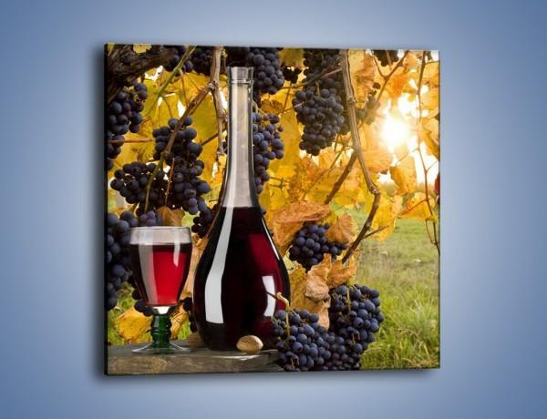 Obraz na płótnie – Wino wśród winogron – jednoczęściowy kwadratowy JN007