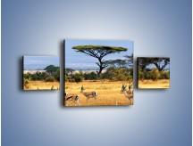 Obraz na płótnie – Antylopy w słonecznej afryce – trzyczęściowy Z003W4