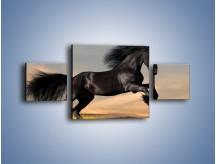Obraz na płótnie – Czarny koń w galopie – trzyczęściowy Z008W4