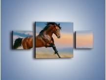 Obraz na płótnie – Brązowy koń na pustyni – trzyczęściowy Z011W4