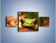 Obraz na płótnie – Bystre oczka małej żabki – trzyczęściowy Z023W4