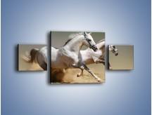 Obraz na płótnie – Białe konie w pustynnym galopie – trzyczęściowy Z055W4