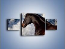 Obraz na płótnie – Brązowy ogier na zimowym spacerze – trzyczęściowy Z056W4