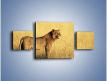 Obraz na płótnie – Czujny wzrok lwicy – trzyczęściowy Z091W4