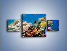 Obraz na płótnie – Fauna i kolorowi towarzysze – trzyczęściowy Z116W4