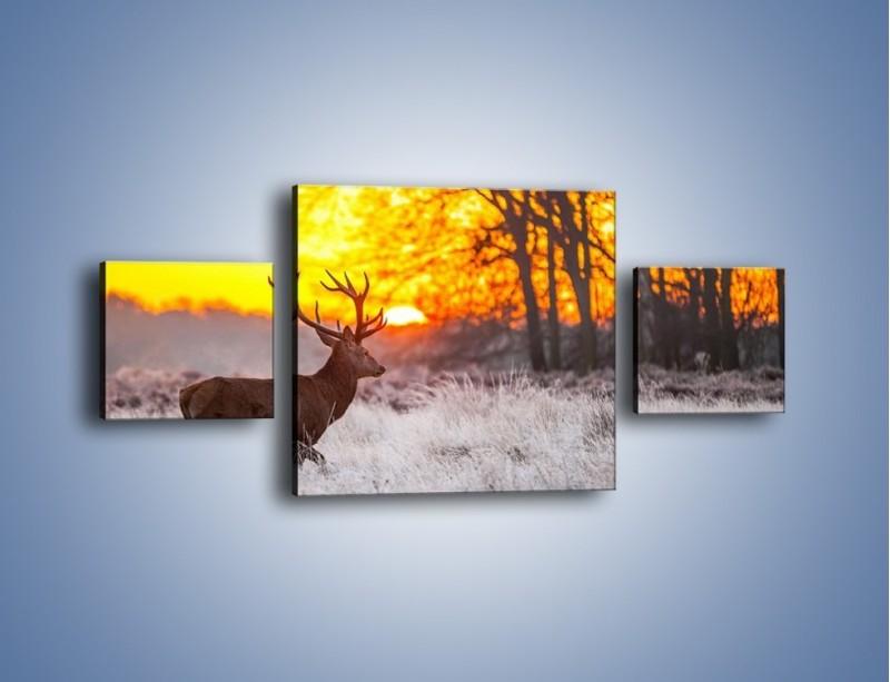 Obraz na płótnie – Jeleń o zachodzie słońca – trzyczęściowy Z164W4