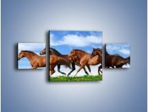 Obraz na płótnie – Galopujące stado brązowych koni – trzyczęściowy Z172W4