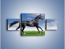 Obraz na płótnie – Dziki koń w biegu – trzyczęściowy Z194W4
