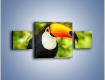Obraz na płótnie – Kolorowy dziób tukana – trzyczęściowy Z195W4