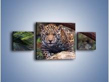 Obraz na płótnie – Jaguar w gotowości – trzyczęściowy Z198W4