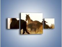 Obraz na płótnie – Cowboy wśród koni – trzyczęściowy Z206W4