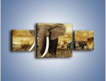 Obraz na płótnie – Drogocenne kły słonia – trzyczęściowy Z214W4