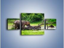 Obraz na płótnie – Kąpiel ze słoniem – trzyczęściowy Z216W4