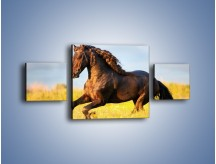 Obraz na płótnie – Dziki koń i jego mięśnie – trzyczęściowy Z232W4