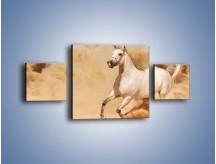 Obraz na płótnie – Klacz w tumanach piasku – trzyczęściowy Z233W4