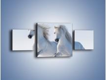 Obraz na płótnie – Gonitwa konna w bieli – trzyczęściowy Z240W4