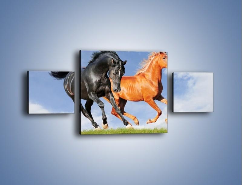 Obraz na płótnie – Czarny rudy i koń – trzyczęściowy Z241W4
