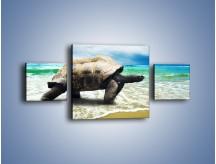 Obraz na płótnie – Jak tu nie kochać żółwi – trzyczęściowy Z251W4