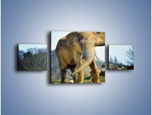 Obraz na płótnie – Ciężkie życie słonia – trzyczęściowy Z273W4