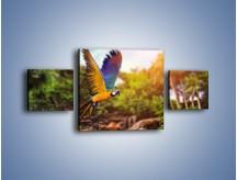 Obraz na płótnie – Kolorowa papuga w locie – trzyczęściowy Z280W4