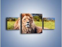Obraz na płótnie – Dostojny lew na sawannie – trzyczęściowy Z282W4