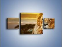 Obraz na płótnie – Dojrzały wiek lwa – trzyczęściowy Z303W4