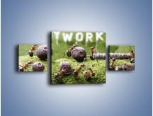 Obraz na płótnie – Ciężka praca mrówek – trzyczęściowy Z308W4
